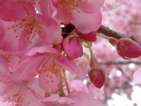 雲見でダイビング→南伊豆で桜![5]