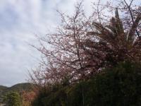 曇り空が残念...神社へお参り。[3]
