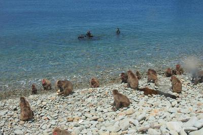 monkey_beach08.jpg