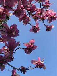 春!良い天気ですね~[1]