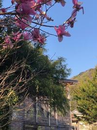 春!良い天気ですね~[2]