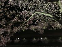 ダイビングの後は夜桜へ~[3]