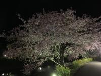 ダイビングの後は夜桜へ~[4]