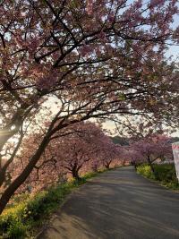 伊豆の春は盛り沢山だよ!![1]