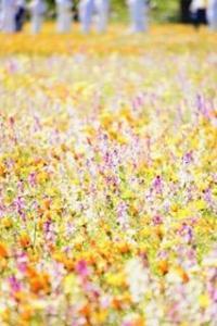 海とお花とダイビング[1]