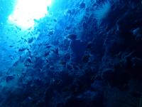海青い透視度20m・水温24℃@雲見[4]
