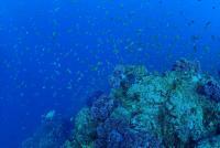 今日は田子へgo diving![2]