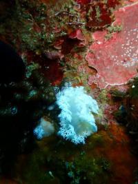 潜水日和の雲見[4]