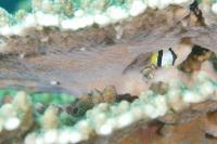 水中生物写真[7]