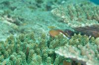 水中生物写真[5]