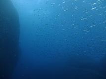 ザ・黒潮! 雲見2ボート・透視度25m/水温21.7℃/気温16℃! 水中は真っ青・陸はポカポカです![5]