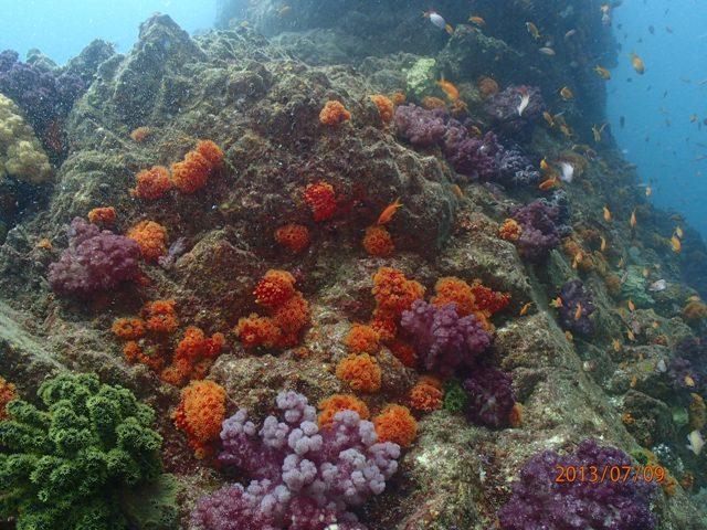 雲見 外洋 沖の根 VS 牛着岩 魚の群れ群れはどっちかな??[1]