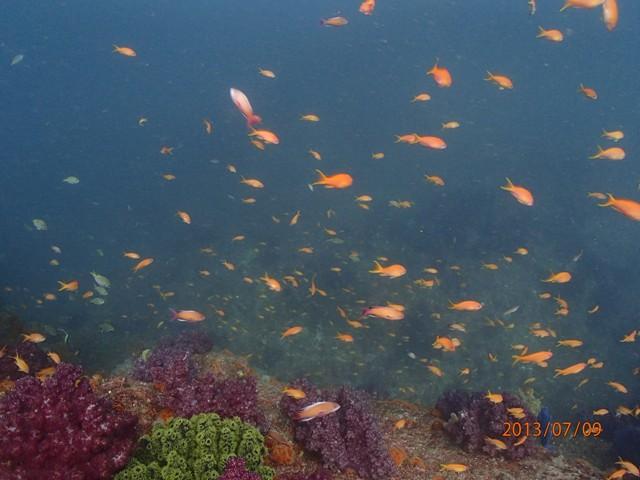 雲見 外洋 沖の根 VS 牛着岩 魚の群れ群れはどっちかな??[2]