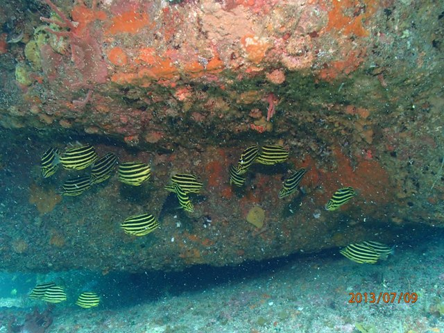 雲見 外洋 沖の根 VS 牛着岩 魚の群れ群れはどっちかな??[3]