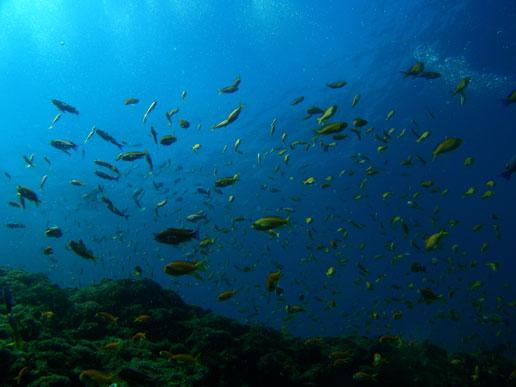魚も人もみんな暖かい海が好き@雲見[3]