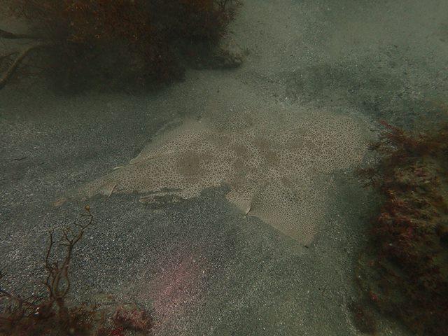 穏やかになりつつある海。田子[5]